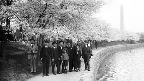 Historic photo of Cherry Blossoms